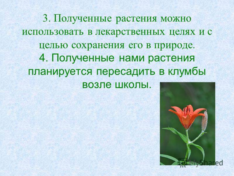 3. Полученные растения можно использовать в лекарственных целях и с целью сохранения его в природе. 4. Полученные нами растения планируется пересадить в клумбы возле школы.