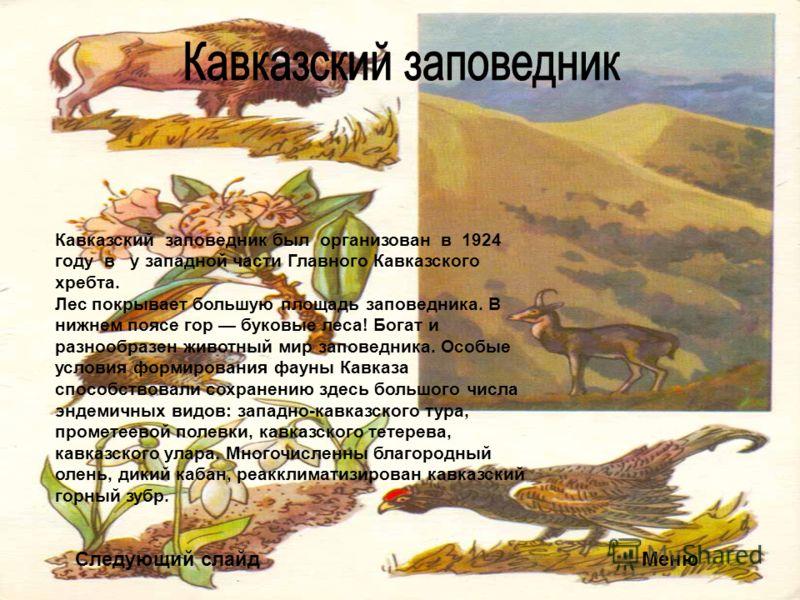 Следующий слайдМеню Кавказский заповедник был организован в 1924 году в у западной части Главного Кавказского хребта. Лес покрывает большую площадь заповедника. В нижнем поясе гор буковые леса! Богат и разнообразен животный мир заповедника. Особые ус