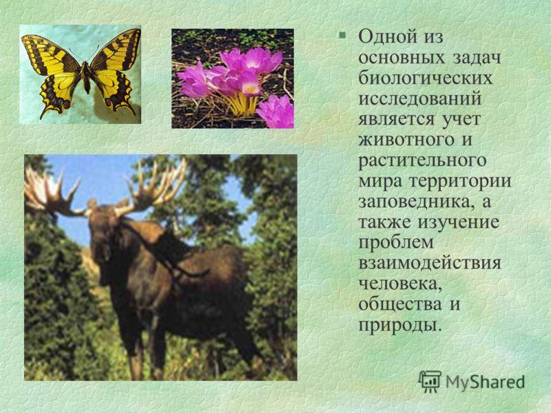 §Одной из основных задач биологических исследований является учет животного и растительного мира территории заповедника, а также изучение проблем взаимодействия человека, общества и природы.