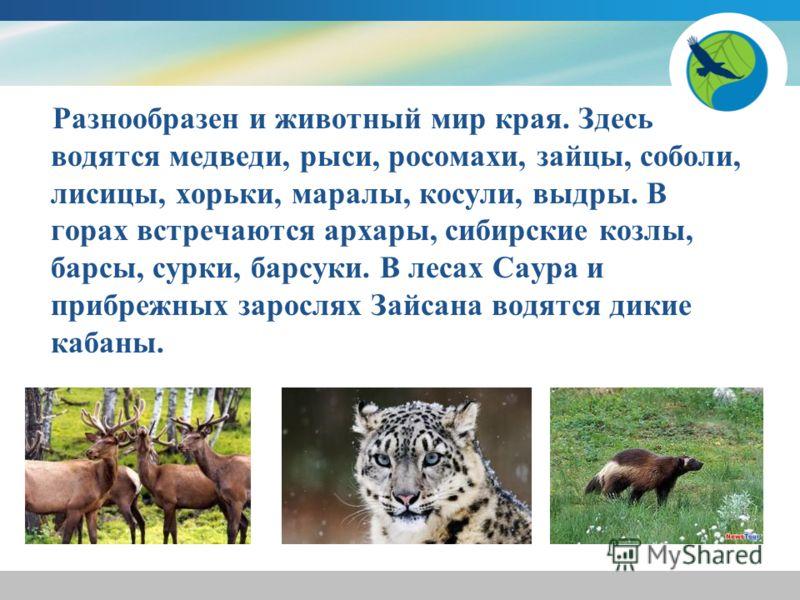 Разнообразен и животный мир края. Здесь водятся медведи, рыси, росомахи, зайцы, соболи, лисицы, хорьки, маралы, косули, выдры. В горах встречаются архары, сибирские козлы, барсы, сурки, барсуки. В лесах Саура и прибрежных зарослях Зайсана водятся дик