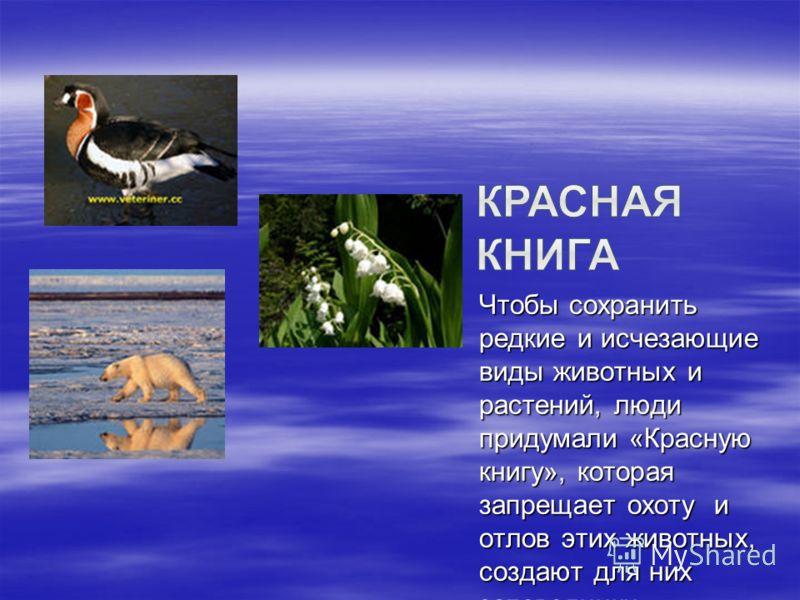 Чтобы сохранить редкие и исчезающие виды животных и растений, люди придумали «Красную книгу», которая запрещает охоту и отлов этих животных, создают для них заповедники.