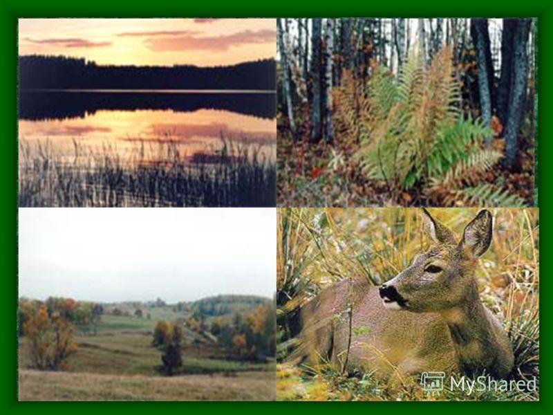 Алам-Педья Самый молодой заповедник Создан в конце 90 годов прошлого века Задача: сохранение флоры и фауны болот, их природных особенностей