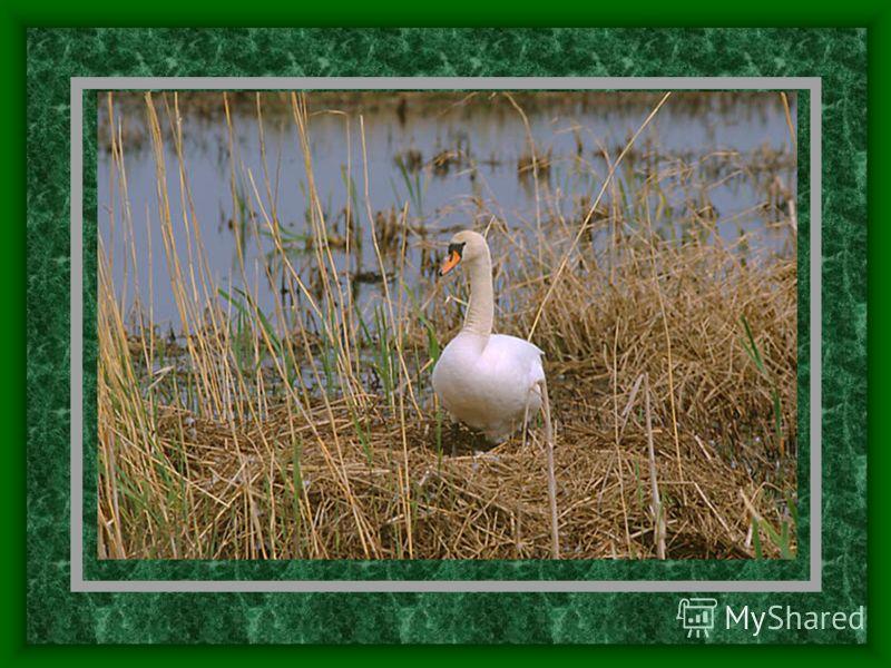 Матсалу Расположен на западе Эстонии, включает акваторию Матсалуского залива и его побережье Создан 1 марта 1958 года Основная задача: охрана залива и его окрестностей как важного места гнездования и отдыха мигрирующих водоплавающих птиц
