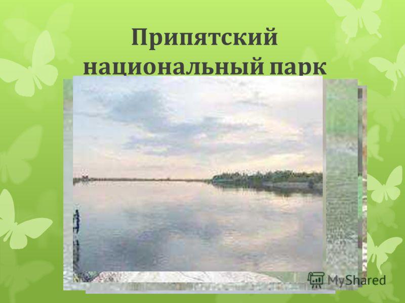 Припятский национальный парк