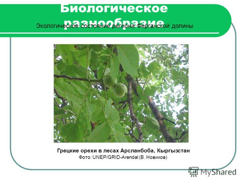 Биологическое разнообразие Экологическое состояние региона Ферганской долины Грецкие орехи в лесах Арсланбоба, Кыргызстан Фото: UNEP/GRID-Arendal (В. Новиков)