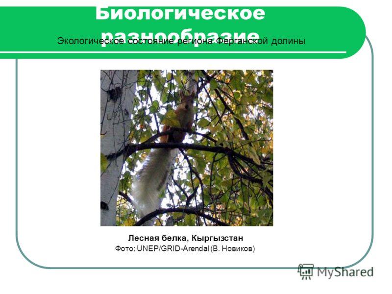 Биологическое разнообразие Экологическое состояние региона Ферганской долины Лесная белка, Кыргызстан Фото: UNEP/GRID-Arendal (В. Новиков)