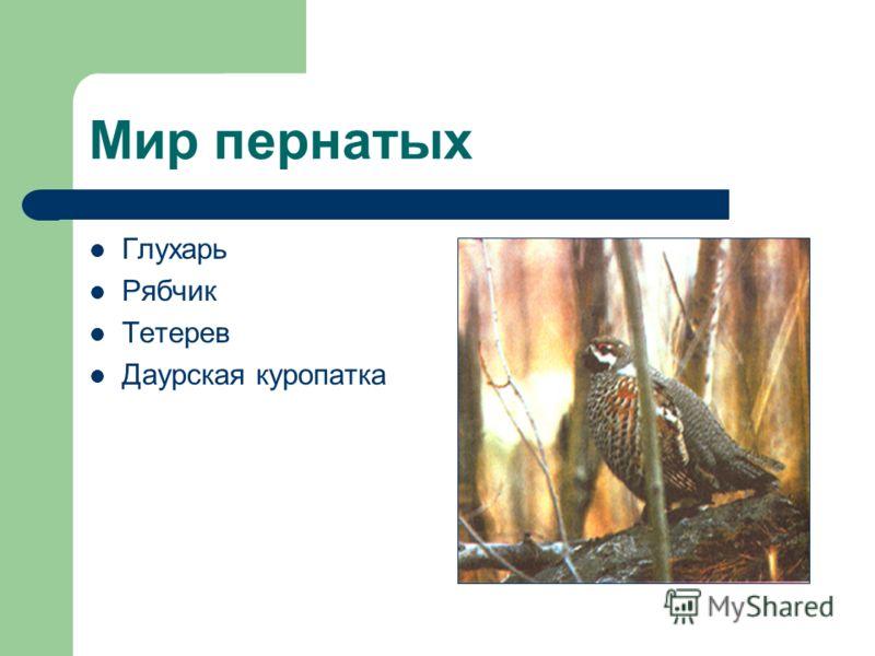 Мир пернатых Глухарь Рябчик Тетерев Даурская куропатка