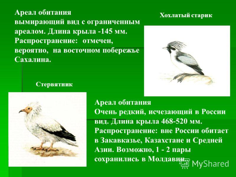 Снежный барс Ареал обитания Редкий, находящийся под угрозой исчезновения вид.Длина тела 130 см, хвоста - 90. Обитатель зоны гор Алтая. В России расположена незначительная часть ареала снежного барса. В настоящее время снежный барс – в пределах России