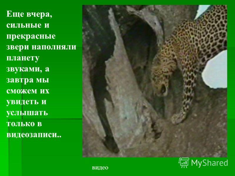Ежегодно погибает один вид позвоночных. 120 видов млекопитающих на грани вымирания. Им угрожают хищники?