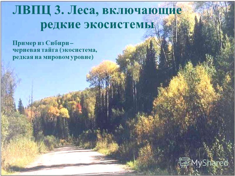 ЛВПЦ 3. Леса, включающие редкие экосистемы Пример из Сибири – черневая тайга (экосистема, редкая на мировом уровне)