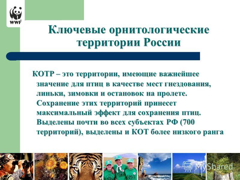 Ключевые орнитологические территории России КОТР – это территории, имеющие важнейшее значение для птиц в качестве мест гнездования, линьки, зимовки и остановок на пролете. Сохранение этих территорий принесет максимальный эффект для сохранения птиц. В