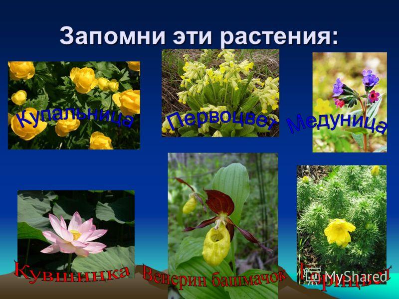 Запомни эти растения: