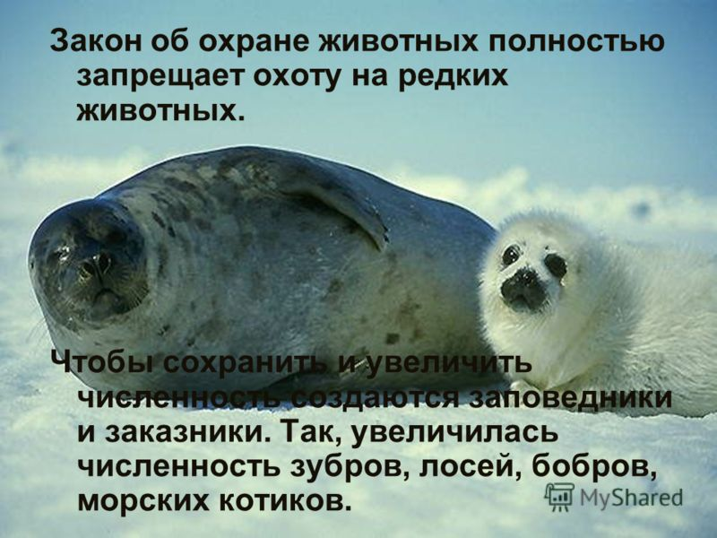 Закон об охране животных полностью запрещает охоту на редких животных. Чтобы сохранить и увеличить численность создаются заповедники и заказники. Так, увеличилась численность зубров, лосей, бобров, морских котиков.