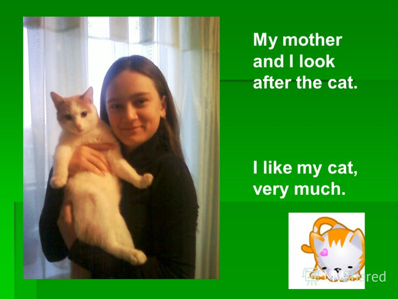 My mother and I look after the cat. I like my cat, very much.