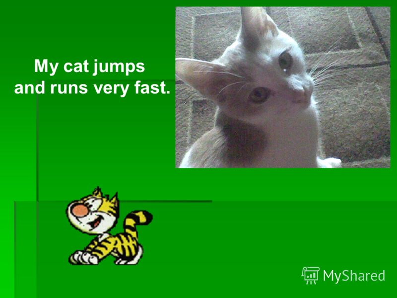 My cat jumps and runs very fast.