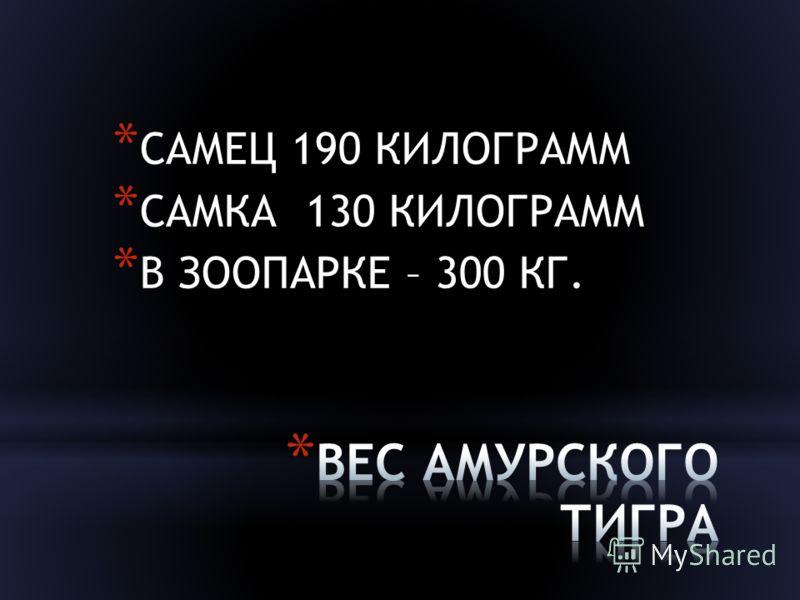 * САМЕЦ 190 КИЛОГРАММ * САМКА 130 КИЛОГРАММ * В ЗООПАРКЕ – 300 КГ.