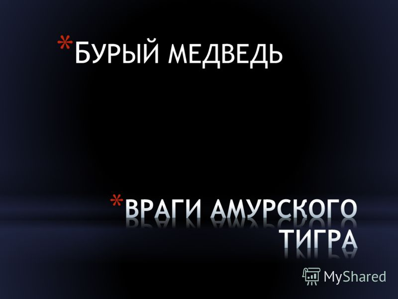 * Б УРЫЙ МЕДВЕДЬ