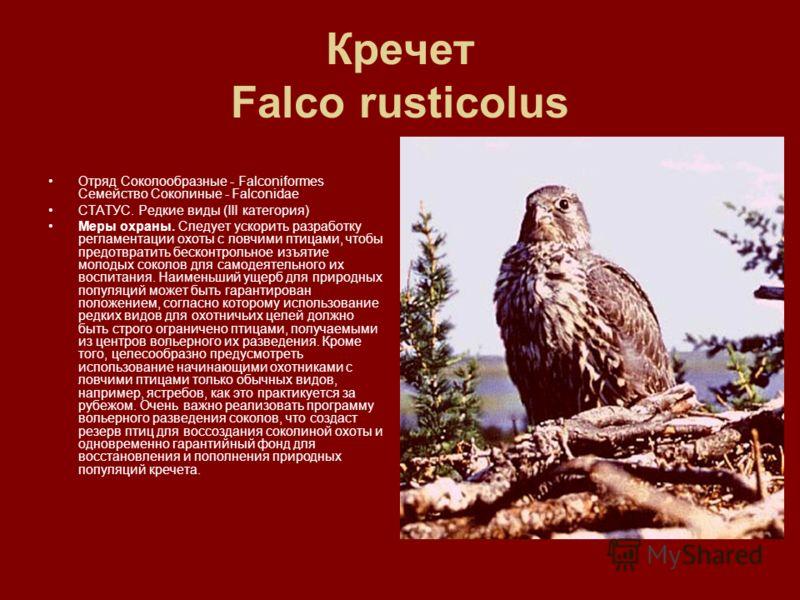 Кречет Falco rusticolus Отряд Соколообразные - Falconiformes Семейство Соколиные - Falconidae СТАТУС. Редкие виды (III категория) Меры охраны. Следует ускорить разработку регламентации охоты с ловчими птицами, чтобы предотвратить бесконтрольное изъят
