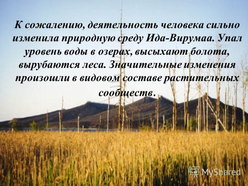 76 К сожалению, деятельность человека сильно изменила природную среду Ида-Вирумаа. Упал уровень воды в озерах, высыхают болота, вырубаются леса. Значительные изменения произошли в видовом составе растительных сообществ.