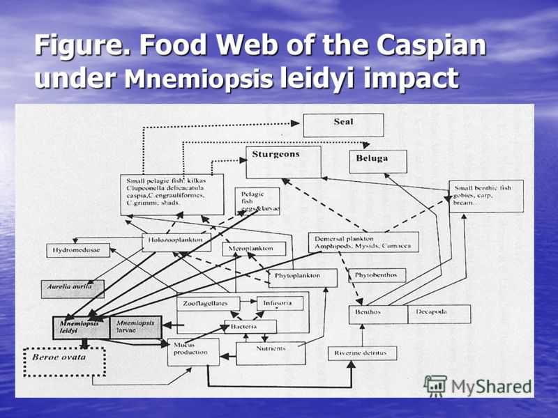 Figure. Food Web of the Caspian under Mnemiopsis leidyi impact