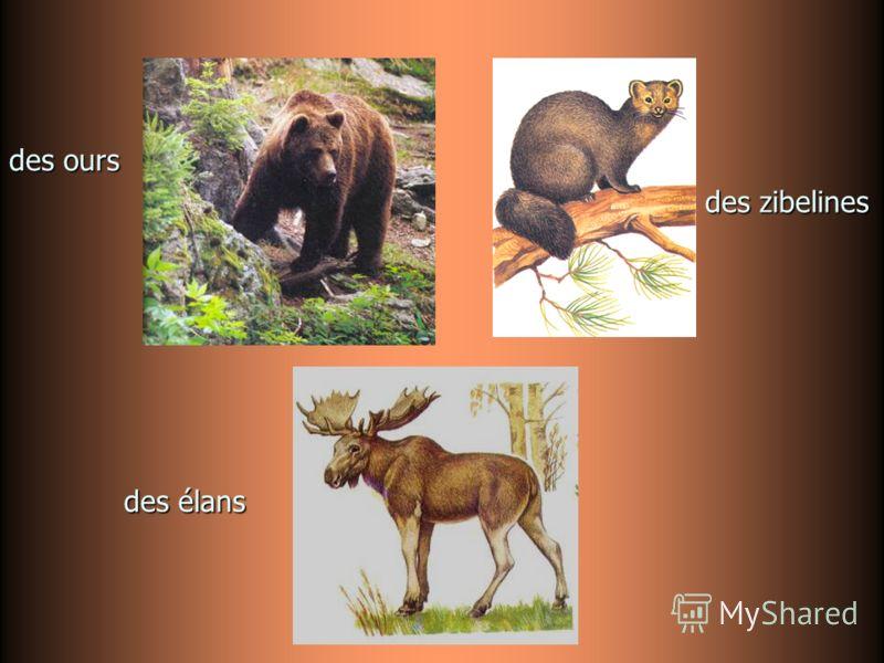 des zibelines des ours des élans