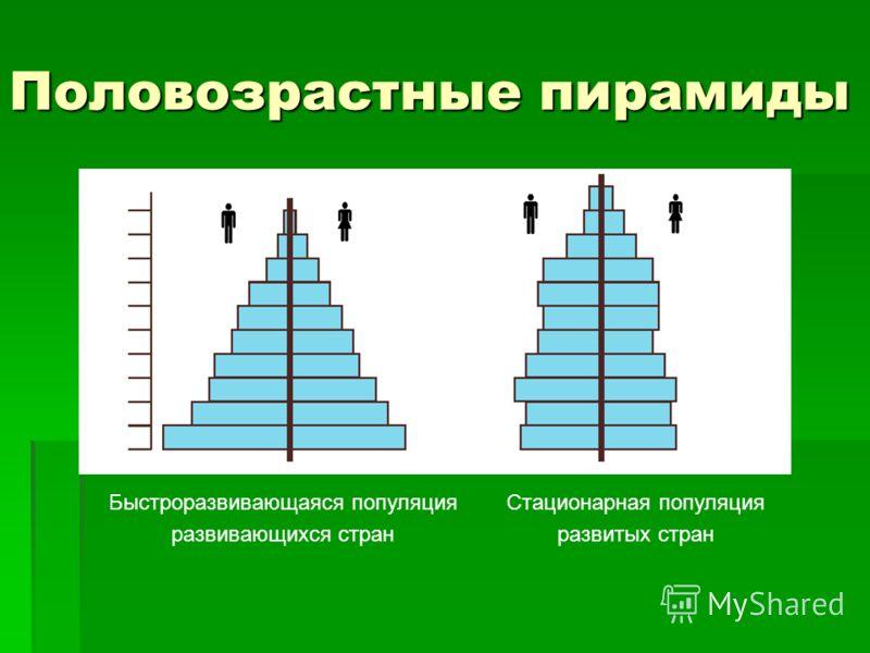 Половозрастные пирамиды Быстроразвивающаяся популяция развивающихся стран Стационарная популяция развитых стран