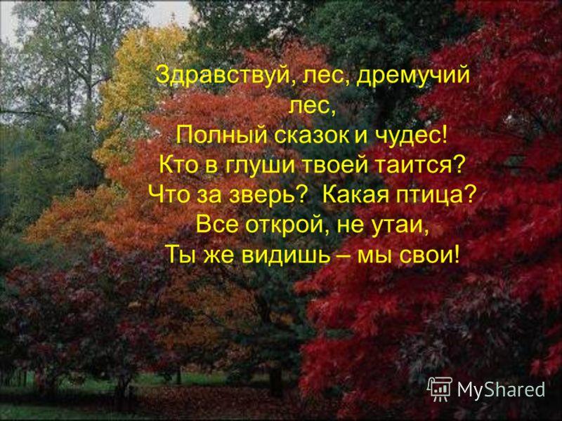 Почему лес называют «царством деревьев?» Кем и чем заселён лес? Какую пользу дает лес человеку?