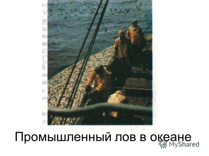 Промышленный лов в океане