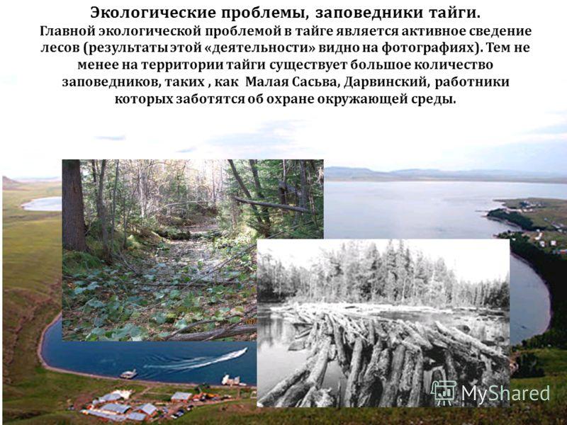 Экологические проблемы, заповедники тайги. Главной экологической проблемой в тайге является активное сведение лесов (результаты этой «деятельности» видно на фотографиях). Тем не менее на территории тайги существует большое количество заповедников, та