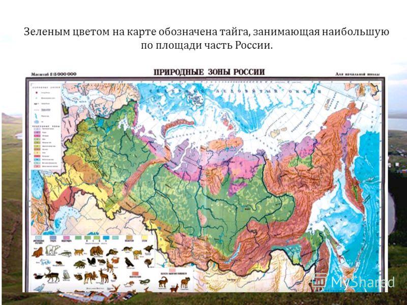 Зеленым цветом на карте обозначена тайга, занимающая наибольшую по площади часть России.