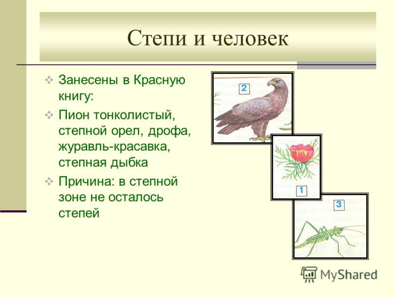 Степи и человек Занесены в Красную книгу: Пион тонколистый, степной орел, дрофа, журавль-красавка, степная дыбка Причина: в степной зоне не осталось степей