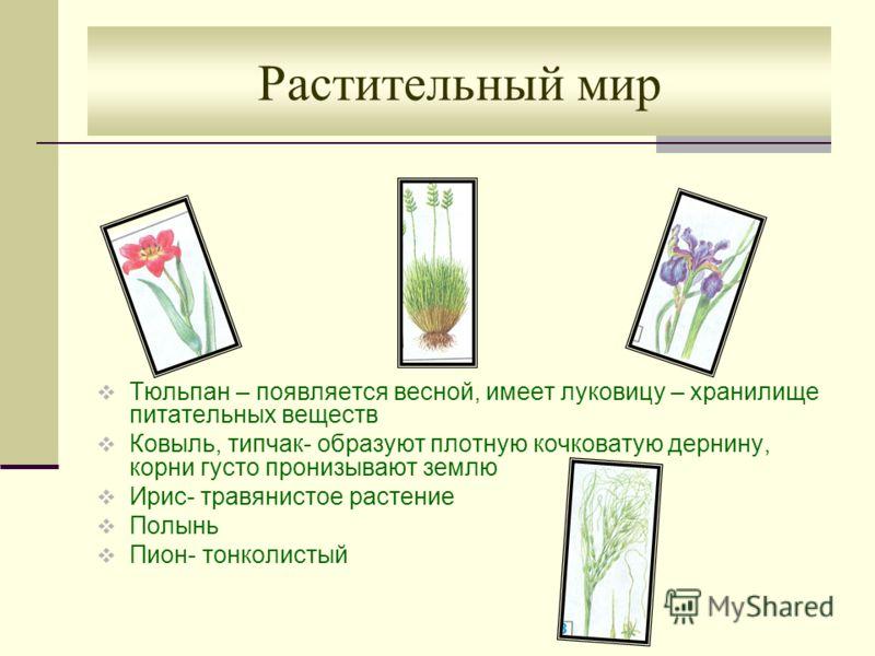 Растительный мир Тюльпан – появляется весной, имеет луковицу – хранилище питательных веществ Ковыль, типчак- образуют плотную кочковатую дернину, корни густо пронизывают землю Ирис- травянистое растение Полынь Пион- тонколистый
