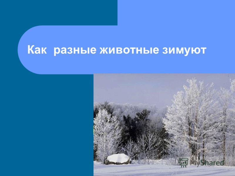 Как разные животные зимуют