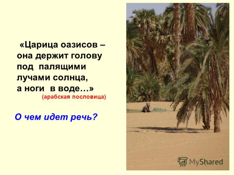 «Царица оазисов – она держит голову под палящими лучами солнца, а ноги в воде…» (арабская пословица) О чем идет речь?