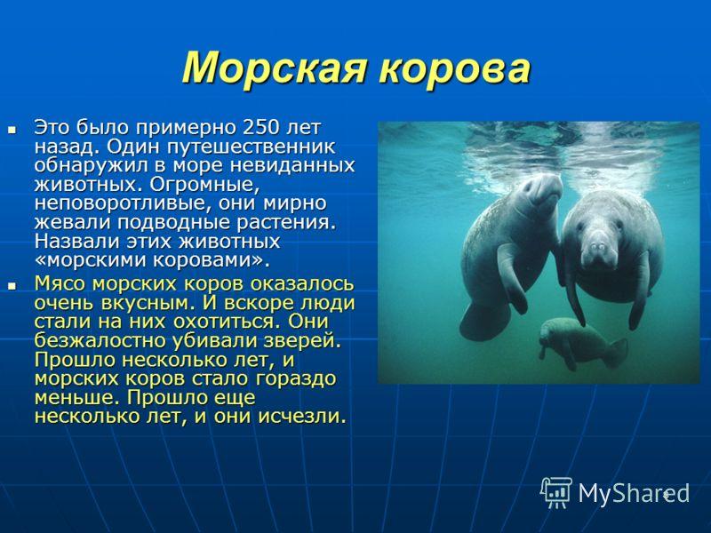 8 Морская корова Это было примерно 250 лет назад. Один путешественник обнаружил в море невиданных животных. Огромные, неповоротливые, они мирно жевали подводные растения. Назвали этих животных «морскими коровами». Это было примерно 250 лет назад. Оди