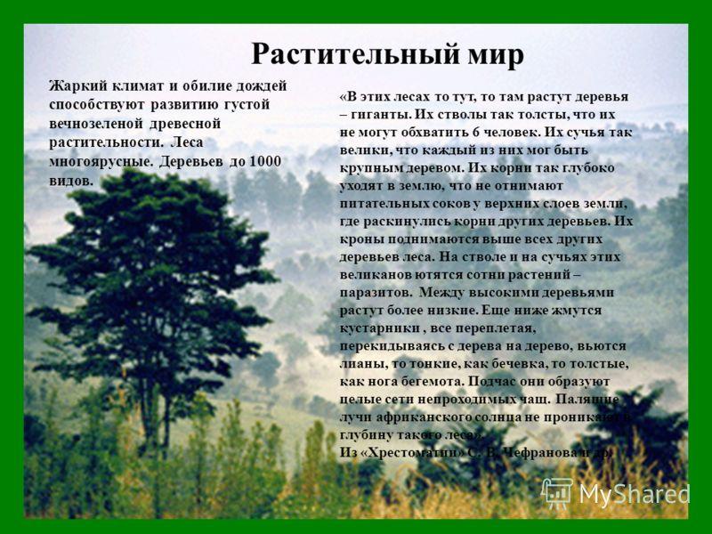 Растительный мир «В этих лесах то тут, то там растут деревья – гиганты. Их стволы так толсты, что их не могут обхватить 6 человек. Их сучья так велики, что каждый из них мог быть крупным деревом. Их корни так глубоко уходят в землю, что не отнимают п