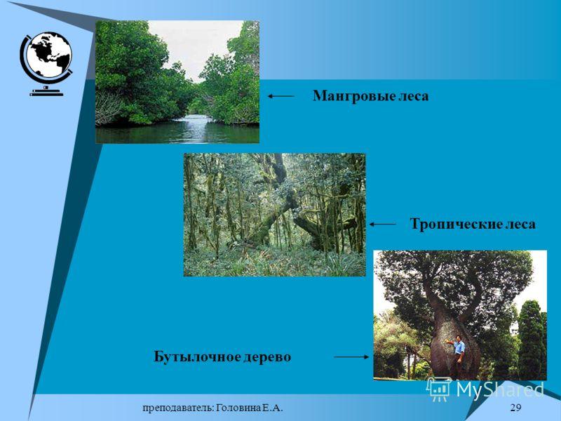 преподаватель: Головина Е.А. 28 Главный вид растительных ресурсов – лесные – самые большие, самые сложноорганизованные и самосохраняющиеся экосистемы. Они покрывают около 30% земной поверхности ( 3866 млн.га). 80% 15 государств Главными характеристик