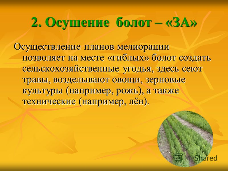 2. Осушение болот – «ЗА» Осуществление планов мелиорации позволяет на месте «гиблых» болот создать сельскохозяйственные угодья, здесь сеют травы, возделывают овощи, зерновые культуры (например, рожь), а также технические (например, лён).
