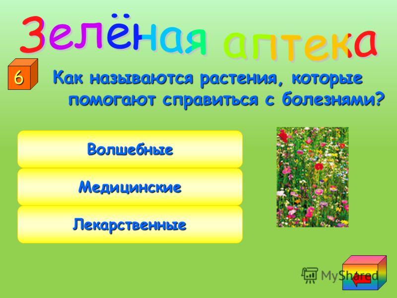У этого растения много названий: дикая роза, шипец, щуплица. шипец, щуплица. Цветёт в начале лета, а плоды собирают осенью. Шиповник Калина Рябина 5