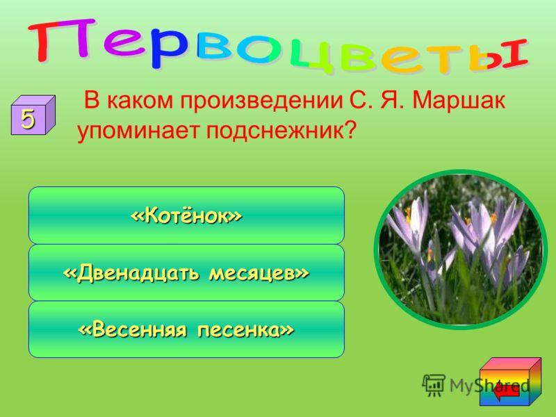 Какое растение в природе существует: мать - и – мачеха дочь и падчерица сын и пасынок 4