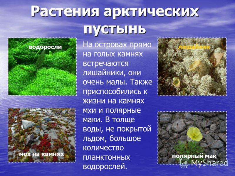 Презентация растения в арктике 4 класс окружающий мир