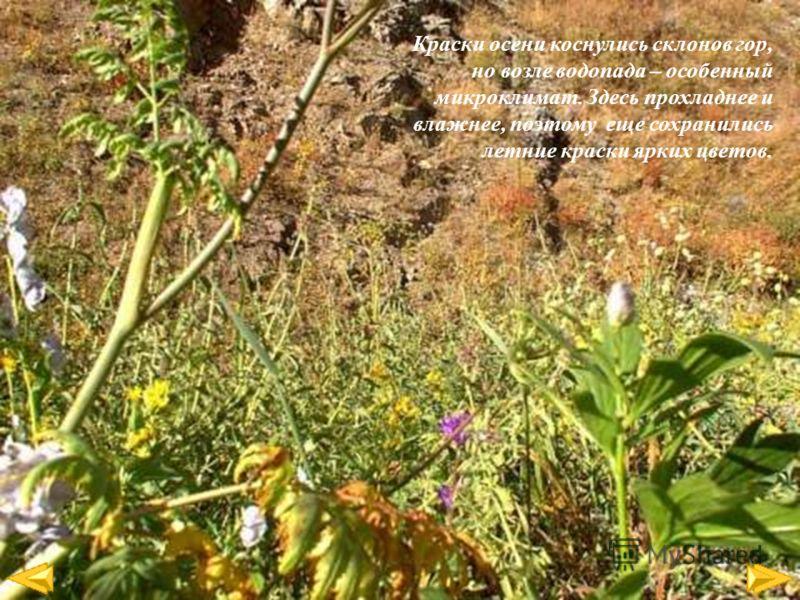 Краски осени коснулись склонов гор, но возле водопада – особенный микроклимат. Здесь прохладнее и влажнее, поэтому еще сохранились летние краски ярких цветов.