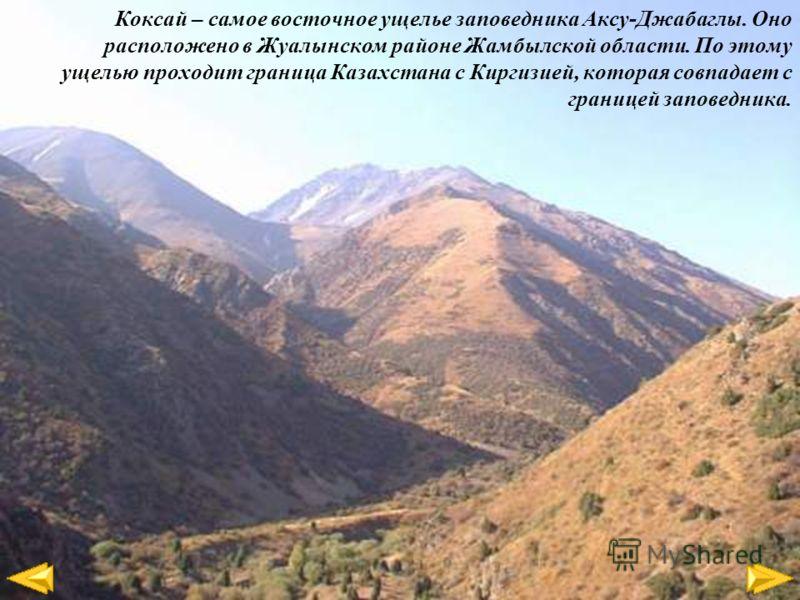 Коксай – самое восточное ущелье заповедника Аксу-Джабаглы. Оно расположено в Жуалынском районе Жамбылской области. По этому ущелью проходит граница Казахстана с Киргизией, которая совпадает с границей заповедника.