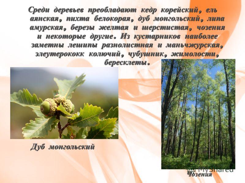 Среди деревьев преобладают кедр корейский, ель аянская, пихта белокорая, дуб монгольский, липа амурская, березы желтая и шерстистая, чозения и некоторые другие. Из кустарников наиболее заметны лешипы разнолистная и маньчжурская, элеутерококк колючий,