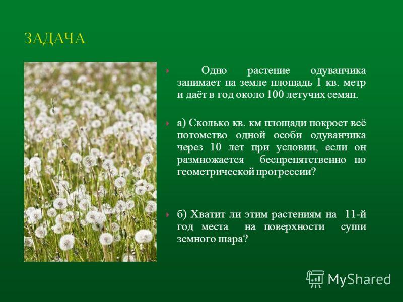 Одно растение одуванчика занимает на земле площадь 1 кв. метр и даёт в год около 100 летучих семян. а) Сколько кв. км площади покроет всё потомство одной особи одуванчика через 10 лет при условии, если он размножается беспрепятственно по геометрическ