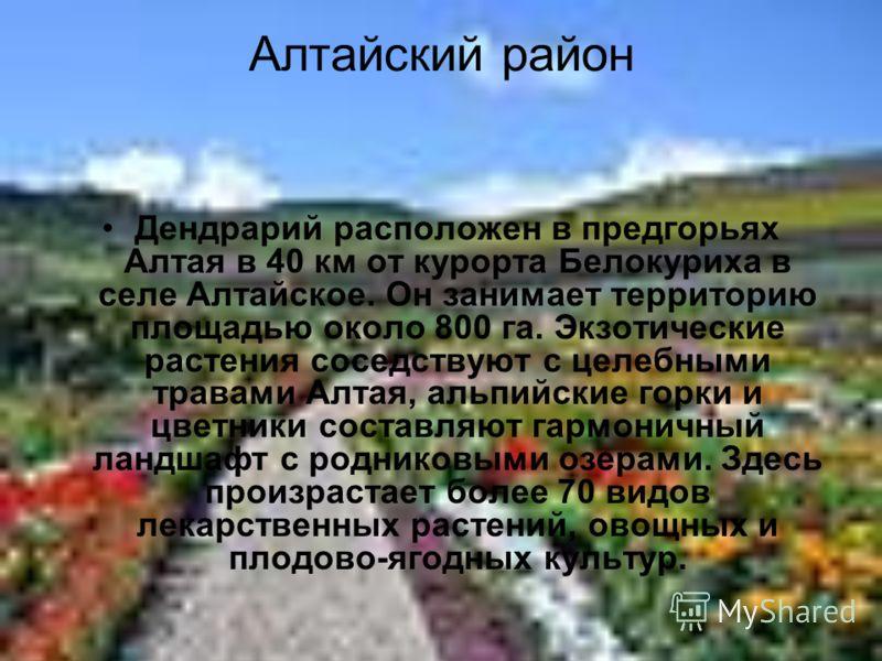 Алтайский район Дендрарий расположен в предгорьях Алтая в 40 км от курорта Белокуриха в селе Алтайское. Он занимает территорию площадью около 800 га. Экзотические растения соседствуют с целебными травами Алтая, альпийские горки и цветники составляют