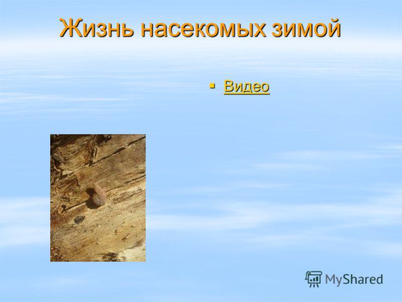 Жизнь насекомых зимой Видео Видео Видео