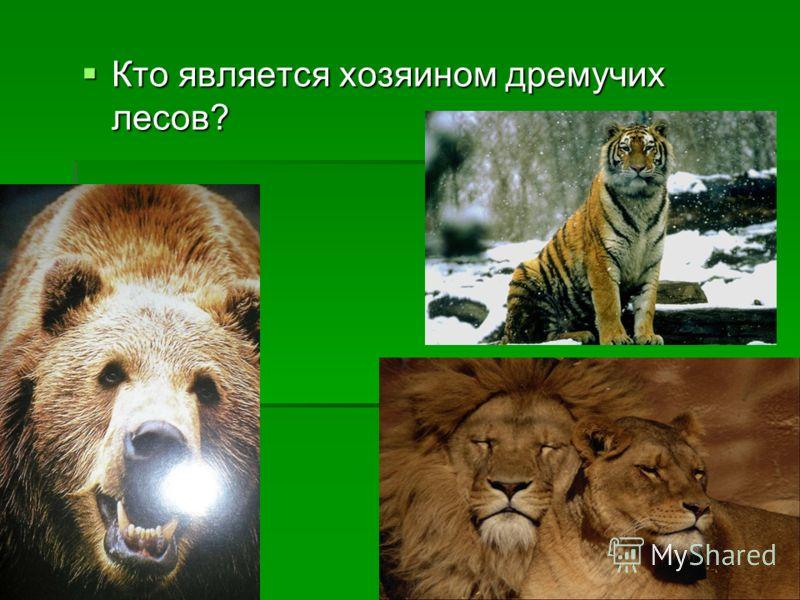 Кто является хозяином дремучих лесов? Кто является хозяином дремучих лесов?