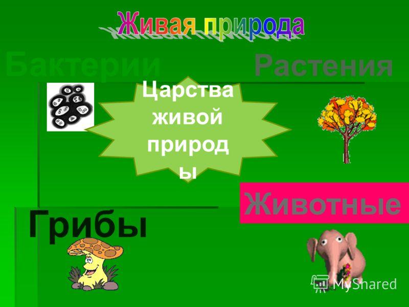 Бактерии Растения Животные Грибы Царства живой природ ы