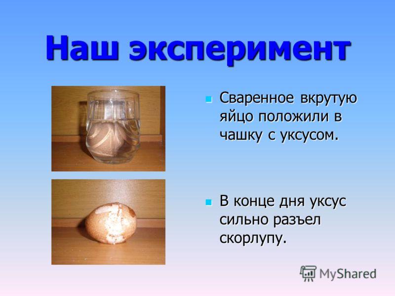 Наш эксперимент Сваренное вкрутую яйцо положили в чашку с уксусом. Сваренное вкрутую яйцо положили в чашку с уксусом. В конце дня уксус сильно разъел скорлупу. В конце дня уксус сильно разъел скорлупу.